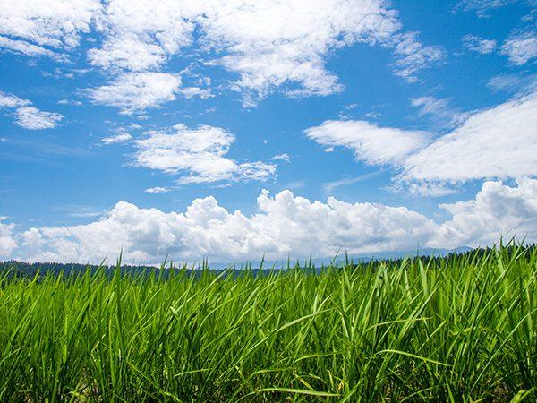 田園風景のさわやかさと、素直な心をかけたマリッジリング。シンプルで幅の広いマリッジリングをお探しの方はコチラ