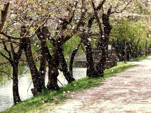 BRIDGE銀座のやわらかな春風は首都圏東京ではここでしか見れない限定品結婚指輪