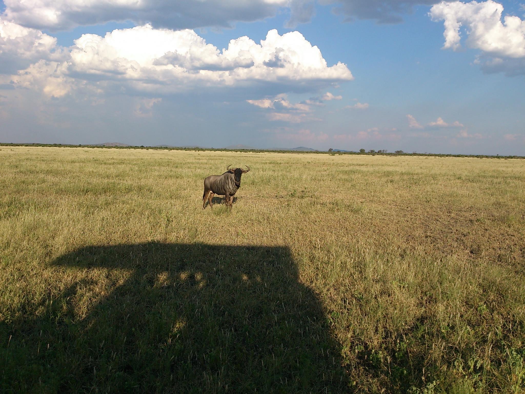 スターオブアフリカは南アフリカのオレンジ川近郊の牧草で発見される