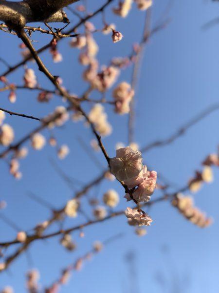 ブリッジ銀座かわいい結婚指輪が花嫁に人気です桜をモチーフにしたデザイン多数展開
