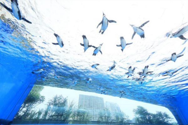銀座のサプライズプロポーズ サンシャイン水族館